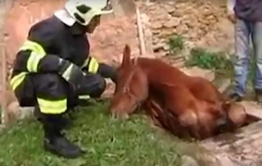 The horse was uninjured after its ordeal and was taken away by its owner Credit: Liveleak