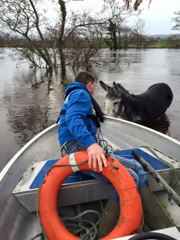 The rescue boat approaches Mike Credit: Facebook/Animal Rescue Animal Heaven (ARAH)
