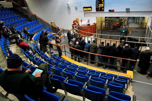 On the the mart at Kilkenny Mart last Thursday where some of the plainer cattle were reduced by €10 to €15/hd. Quality heifers were in demand peaking at €2.55/kg. Photo: Roger Jones.