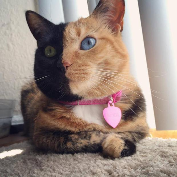 Venus the 'two-face cat' has become an Internet celebrity due to her unique appearance. Facebook