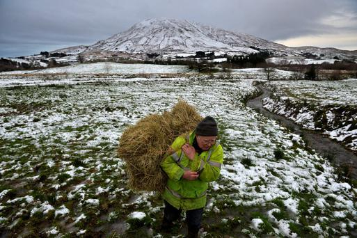Padraic Lowrey brings hay to his livestock at the foot of Mount Gable, Cornamona, County Galway after snow hit the area