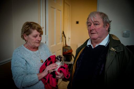 Anthony and Vera O'Donnell with their dog Princess who died in the flooding at their home in Richmond Park, Corbally in Limerick which was severely damaged by floods. Picture: Arthur Carron