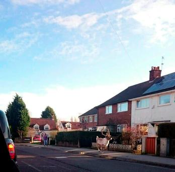 Photo taken from the Twitter feed of Warren Porter showing a reindeer running down a street after escaping from a Tesco Christmas event in Carlton, Nottinghamshire, on Sunday morning. Warren Porter/PA Wire