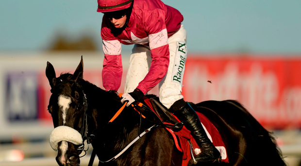 Don Cossack and Bryan Cooper are heading to Kempton on Saturday. Picture credit: Oliver McVeigh / SPORTSFILE