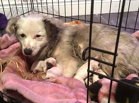 Dusty with her pups