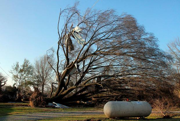A large tree is uprooted after a powerful tornado struck Clarksdale, Mississippi, December 24, 2015. Southern U.S. states began digging out on Thursday after severe storms killed at least 11 people, and Mississippi declared a state of emergency in areas pounded by tornadoes. REUTERS/Justin A. Shaw
