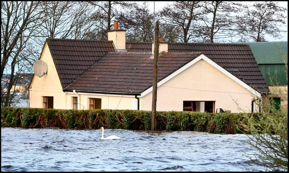 A swan swims past a flooded house in Carrickobreen in Athlone Photo: Steve Humphreys