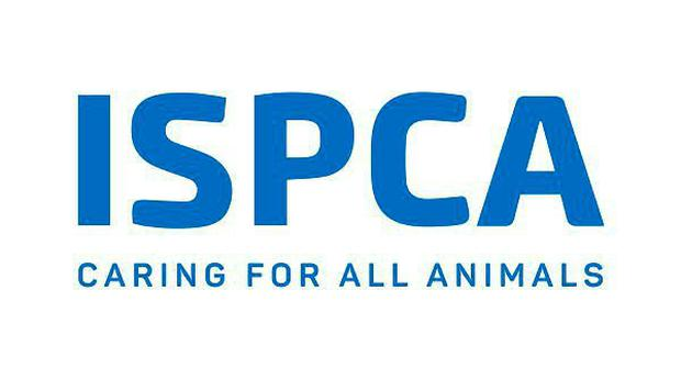 The ISPCA are appealing for information about the killing