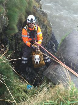 Hooch and his rescuer Kevin Morrissey on Howth Head today Credit: Irish Coast Guard