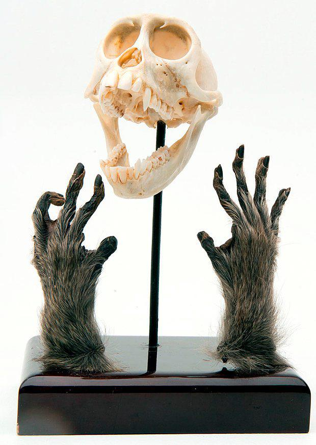 The monkey bodies that George Bush was selling