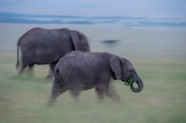 A slow pan of elephants in Kenya's Masai Mara Conservancies. Photo: PA Photo/Sarah Marshall.