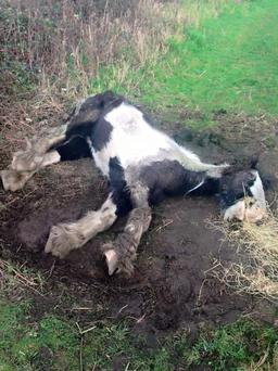Emaciated horse found in Dublin