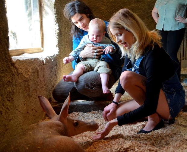 A heavily pregnant Peaches Geldof, her husband Thomas Cohen and their son Astala meet the Zoo's aardvarks during a visit to ZSL London Zoo on April 23, 2013 in London England. (Photo by ZSL London Zoo via Getty Images )