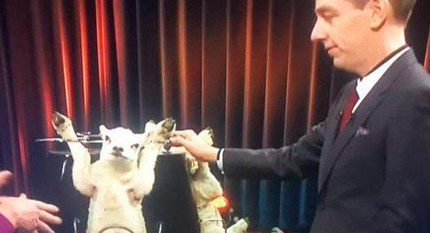 Ryan Tubridy with Dynamo the lamb on the Late Late Show