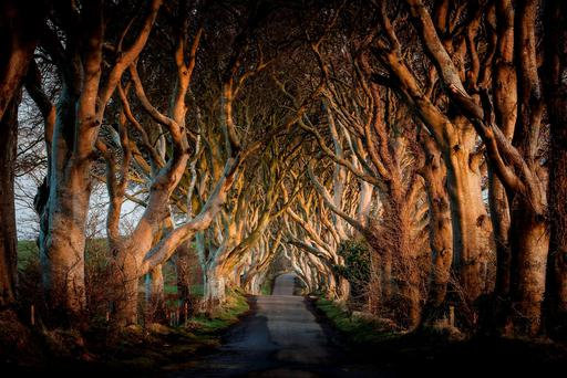 The famous 'Dark Hedges', which featured in 'Game of Thrones' suffered damage during Storm Gertrude, as two of the giant beech trees were uprooted. Photo: PA