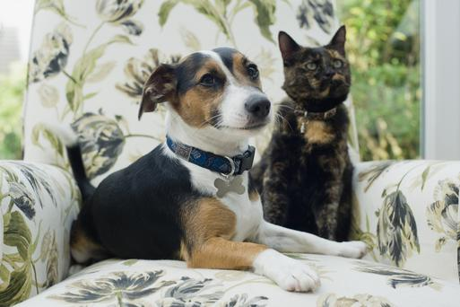 A neuroscientist has tested which of our favoured pets is likely to love us more as part of a BBC2 documentary