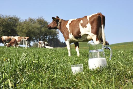 There was a 16pc fall in dairy calvings during the last three months of 2015.