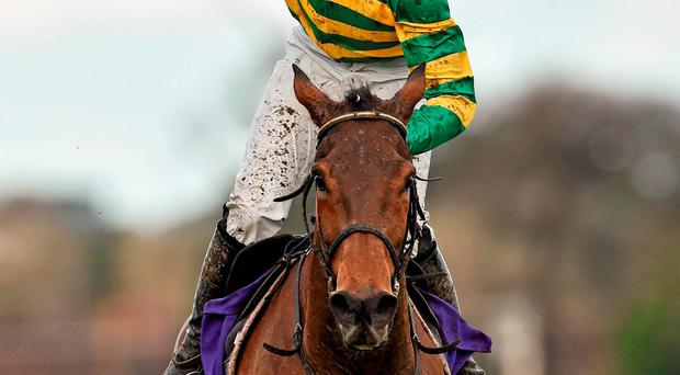 Mark Walsh celebrates after winning the Irish Gold Cup on Carlingford Lough. Picture credit: Matt Browne / Sportsfile