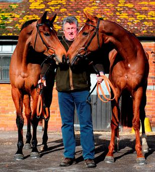 Paul Nicholls with Dodging Bullets and Silviniaco Conti during yesterday's press day at his Manor Farm stables: Harry Trump/Getty Images