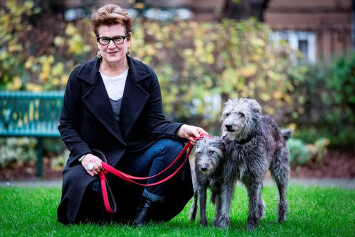 Unconditional love: Meg Rosoff with her two 10 year old lurchers Blue and Juno (left).
