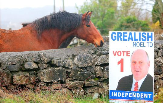 A horse outside Oranmore, Co Galway inspects the election board of Noel Grealish. Photo: Hany Marzouk