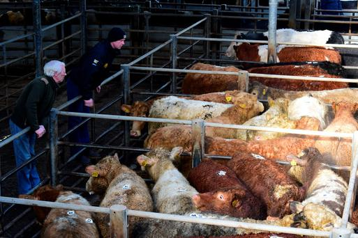 Farmers eye up the cattle at Cillin Hill Mart, Kilkenny. Photo: Roger Jones.