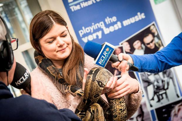 Election 2016 candidate Kathleen Funchion (Sinn Fein) gets to grips with Caesar The Snake during KCLR's I'm A Politician Get Me Out Of Here. Photo: Ken McGuire/KCLR