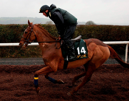Annie Power on the gallops at Willie Mullins' stables at Closutton, Carlow, yesterday. Photo: Brian Lawless/PA