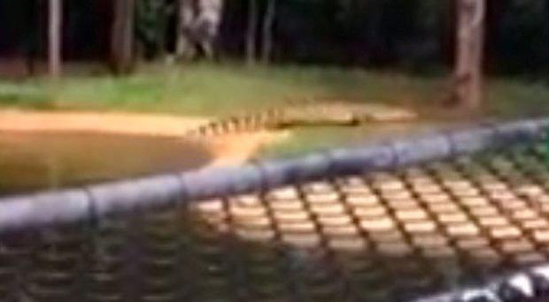 The crocodile slithers out of the water towards Renee Robertson at the Billabong Sanctuary near Townsville. Photo: YouTube