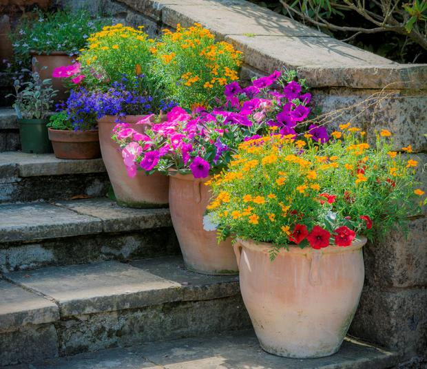 Top 30 Potted Plants