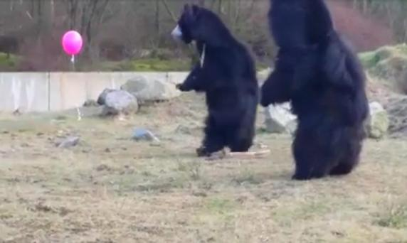 The footage was taken during a visit to a zoo in the Netherlands