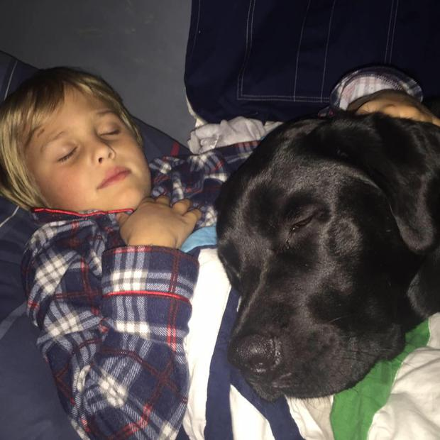 Luke Nuttall (7) and Jedi the 'diabetes dog'. Photo: Saving Luke - Luke and Jedi - Fighting Type 1 Diabetes Together / Facebook.