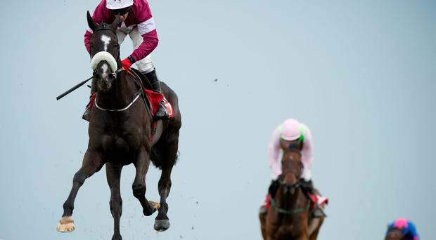 'People have been crabbing Don Cossack, but for me he has all the trumps for Friday's blue ribband. He jumps very well off spring ground, stays the trip and crucially has the best form in the book' Photo: Edward Whitaker
