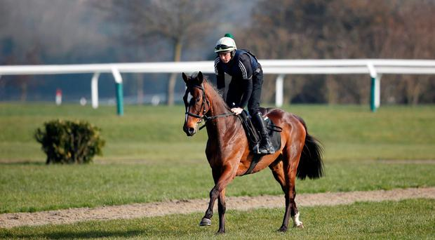 Min, with Sonny Carey up, on the gallops at Cheltenham yesterday. Photo by Alan Crowhurst/Getty Images