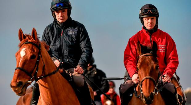 Annie Power, left, under Ruby Walsh, and Nichols Canyon, with Paul Townend up, on the gallops at Cheltenham yesterday. SPORTSFILE