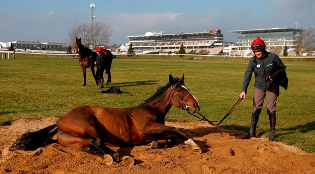 Vroum Vroum Mag enjoys a roll at Cheltenham yesterday and is backed to extend Willie Mullins' winning run in the Mares' Hurdle today. PA