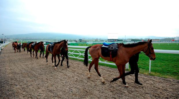 Horses make their way back to the stables after a morning gallops session during Champion Day of the 2016 Cheltenham Festival at Cheltenham Racecourse