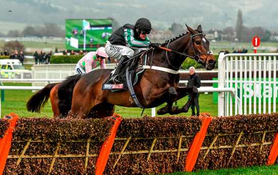 Altior, with Nico de Boinville up, on the way to winning the Supreme Novices' Hurdle – much to the delight of Wayne Bailey's followers who enjoyed a 9/1 treble thanks to his other winning tips, Douvan and Vroum Vroum Mag (SPORTSFILE)