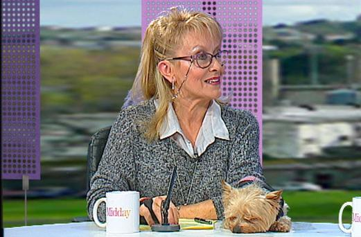 Teddy joins his beloved Twink on the panel for TV3's Midday Show. Photo: TV3