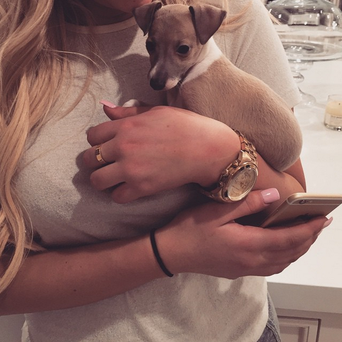 Kendal Jenner's pup