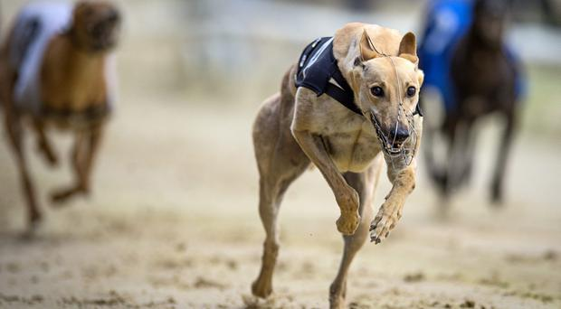 'Witches Belle broke fast from four and led up from Droopys Awesome and Eightythreelarch' Stock photo: Getty