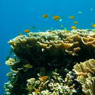 Unesco may now list the Great Barrier Reef as 'in danger' (Photo: Steve Simpson/University of Bristol/PA Wire)
