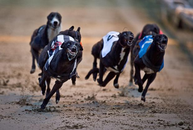 The semi-finals for next week's €80,000-to-the-winner Con & Annie Kirby Memorial Puppy Stake are run at Limerick. Stock photo: Getty