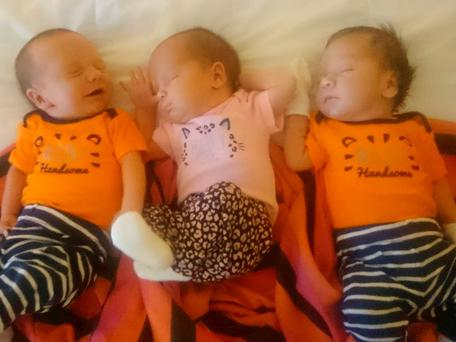 Babies Lachlan, Kelly and Blake Beard, who were born to surrogates in Mexico