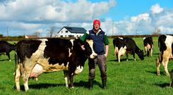 David Mulrooney from Dunbell, Co Kilkenny with his 72-strong herd. He is introducin 9 Jerseys to the herd next year. Photo: Roger Jones.