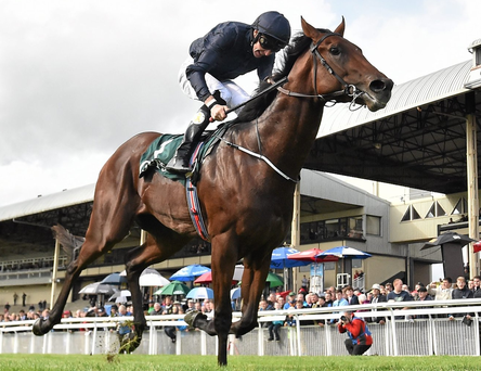 The Aidan O'Brien-trained colt Air Force Blue. Photo: Cody Glenn/Sportsfile