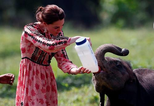 The Duchess of Cambridge feeds a baby rhino (AFP/Getty)