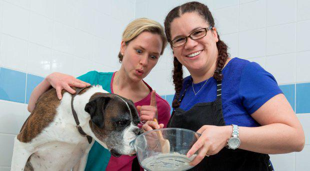 Undated handout photo issued by PDSA of Ray the Boxer with his owner Jasmine Quick (right) and PDSA vet Erin Beale, who wolfed down the entire contents of a baking cupboard, including a bag of flour, an entire kilo of sugar, including the bag