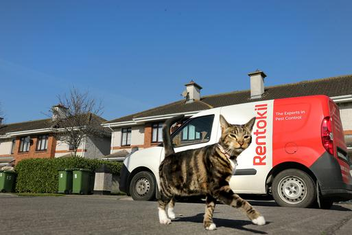 Resident cat 'Kitty' who is outraged at the recent influx of rodent visitors on her patch Picture: Gerry Mooney