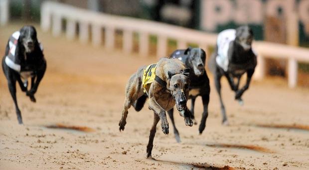'The 30-second mark has only been broken once in the competition this year but that dog, Slippy Ronan, was sold to England and was withdrawn.' Stock photo: Stephen McCarthy/Sportsfile